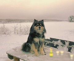 """""""I think we need to defrost the Champagne before our Flickr guests arrive"""" (evakongshavn) Tags: sundaylights happynewyear2018 2018 dog party beachparty beach frozen frozenlake frost water waterscape barbecue champagne cold crisp crispair winter winterwonderland winterwald winterlandscape winterdecorations wonderlandscape wonderfulworld wonderland woodland postcardsfromtheworld exploretheworld new light white natur nature landscapephotography landscape landschaft paysage dogsonadventures snowdog dogsofnorway flickrdogs walkingthedog outside outsidepictures outdoorsphotography outdoors happynewyear newyear year"""