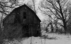 it's gonna be a three dog night.... (BillsExplorations) Tags: threedognight cold snow winter winterweather abandoned abandonedfarm barn australia saying illinois blackandwhite monochrome