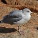 Perros-Guirec - Cold Bird