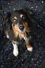 Light dog Alie (Ty_Alie) Tags: australianshepherd aussie aussies alpesmaritimes dogphotography dog d7200 dogs frenchriviera
