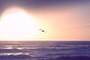 Mouette face à la mer, Carmen 31/12/2017 (BriceLahy) Tags: couché soleil sun mouette face mer sea carmen tempete d3200 nikon