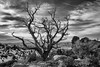 Moab Tree (virgildante) Tags: moab leica m9 28mm utah desert tree arches national park