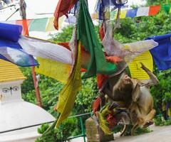Monkey Temple (pecherrr) Tags: nepal kathmandu city temple monkey sony asia