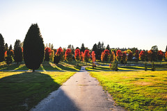 Cemetary-13 (hotcommodity) Tags: urban landscape mountainview cemetary holy religious grounds bc vancouver mountains westcoast pacific autumn fall colors trees changing red yellow orange green grass nature path walk sunny golden gilded light blue sky view hill contrast
