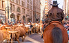 Round 'em up, Move 'em on, Rawhide! (OJeffrey Photography) Tags: denver nationalwesternstockshow texaslonghorns cows longhorns cowgirl nikon d850 ojeffreyphotography ojeffrey jeffowens 17thstreet colorado co