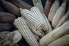 Maiz criollo (Wilmer Medina) Tags: maiz agricultura el salvador criollo granos