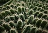Frosty Fern..x (Lisa@Lethen) Tags: winter weather nature ice cold fern leaves hoar frost macro