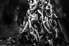 B&N (Charo R.) Tags: fuego llamas cenizas leña chimenea canon monocromática blanco y negro