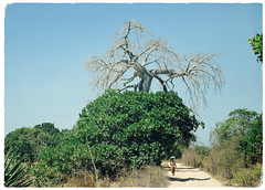 A Quirinthe Scene (The Spirit of the World ( On and Off)) Tags: local walking candid path bush brush mozambique rural countryside upsidedowntree africa quirinthepeninsula remote woman macura