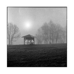 frosted sun • villequier, normandy • 2016 (lem's) Tags: frost sun soleil givre winter hiver pagoda pagode trees arbres villequier normandie normandy rolleiflex t