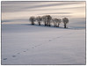 Winter Scenery (Krogen) Tags: norge norway norwegen akershus romerike ullensaker hovin krogen winter vinter landscape landskap olympusep2