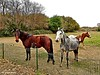 Region of Roussillon / France (Domènec Ventosa) Tags: francia naturaleza árboles prado caballos yeguas pasto campo ecuestre france nature trees meadow horses mares grass countryside equestrian