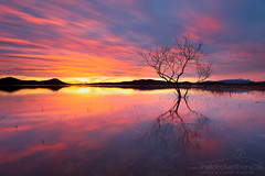 LANDAKA (II) (Obikani) Tags: landa pantano urtegia ullibarri gamboa ganboa álava araba euskadi swamp reflections sunset amazing colorful tree isolated longexposure paísvasco euskalherria landscape paisaje cloud sun color warm cold blue red