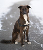 -10F (piano62) Tags: dogs dogrescue anticrueltychicago love unconditionallove companion mansbestfriend handsome chicagoriver sonya7rii sony85mmf18