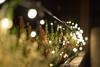 *** BOKEH *** (*** Joe Wild ***) Tags: bkhq year new newyear christmas winter licht light colourful colorful bokeh lebensmittel mahlzeit