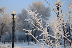 Frost on trees, Abakan, Russia (Fedor Odegov) Tags: frost trees snow white park abakan siberia russia