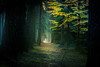 Dark places (Petr Sýkora) Tags: les podzim nature forest dark woods path czech