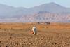 Back from shopping (Nicolas Bussieres (Lost Geckos)) Tags: morocco skoura atlas