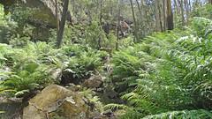 Nattai Creek_04 (Tony Markham) Tags: fortyfootfalls 40footfalls lakealexandrareserve nattaicreek creek waterfall falls sourthernhighlands bushwalk walk