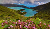 Volcano Lake (free3yourmind) Tags: lagoa dofogo lake flowers pink colorful nature mountains water green blue turquoise clouds cloudy day azores portugal saomiguel volcano crater explore spring blossom
