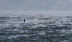 DSC_0337seasmoke1jsm (JayEssEmm) Tags: sea smoke fog ocean plum island massachusetts ma jsmcelvery mcelvery
