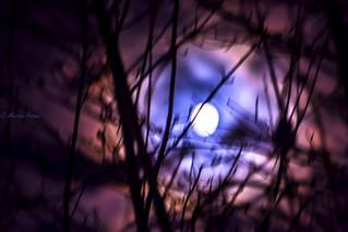 Sliders Sunday - full moon- HSS!
