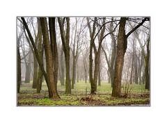 Warm December (Alexandr Voievodin) Tags: warm december park forest trees fog winter nikon 1 v1