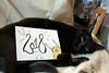Photo of the day: 1.1.2018 (House Of Secrets Incorporated) Tags: loa cat blackcat havanabrown cats pets animal animals newyear happynewyear adventuretime fireworks jakethedog fanart art sketch doodle watercolour ink watercolor kuretake brushpen photooftheday photooftheday2018 aphotoaday2018 dailyphoto dailyphoto2018 dailyphotography dailyphotography2018 dailyphotograph blog blogger blogging kittensandsteamlivejournalcom kittensandsteamblogspotcom instagramkittensandsteam twitterhildebcm belgianblogger
