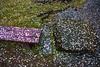 Sakura Fubuki (DanÅke Carlsson) Tags: japan japanese sakura fubuki faded cherry blossom bench stone ground fallen petals