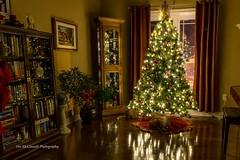 Headless cat inspects the unsuspecting Christmas tree (Stu McCannell) Tags: abigfave flickrdiamond