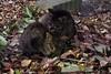 Today's Cat@2017-12-19 (masatsu) Tags: cat thebiggestgroupwithonlycats catspotting pentax mx1