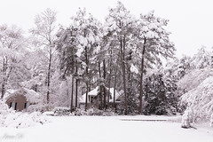 Winter postcard (Irina1010_out for sometime) Tags: winter snow white postcard neighborhood beautiful peaceful silent december2017 canon outstandingromanianphotographers