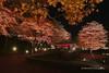 Illuminated Autumn Leaves (_TAKATEN_) Tags: sigma sd quattro foveon sdq autumn sfd