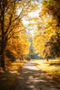 Colourful lightful alleys in the autumn Oranienbaum park. (g_reg_walker) Tags: color colour green orange red sunny landscape scenery light nature flora forest tree wild park russia oranienbaum saint petersburg autumn sky blue clear alley path pathway walk