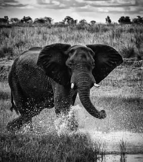Chobe National Park (XXIV)