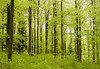 Spring Forest (Enaruna) Tags: baum buche bäume forest pflanze pflanzen plant plants tree trees wald wood woods