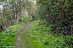 The Uphill Path (M C Smith) Tags: hill pentax k7 weeds track trees green sky blue bushes eppingforest