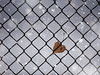 love on a cold fence (marianna_a.) Tags: fence friday hff aspen leaf heart fallen falling snow winter p3140547 mariannaarmata graphic pattern chainlink wire twisted