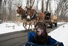 Yield to the Mules... (doug dibble) Tags: wildwoodmetropark toledometroparks toledo mules carriage chariot chocolatelab labradorretriever lab labrador seniordog christmas