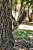 Equilibrio (mArregui) Tags: wwwarreguimeluscom marregui marreguiblogwordpresscom ardilla bosque chapultepec bosquedechapultepec méxico méxicodf ciudaddeméxico animal roedor