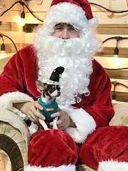 Santa Loves Peanut (Cindy's Here) Tags: santalovespeanut peanut santa christmas uglychristmassweater holiday 100xthe2017edition 100x2017 image94100 msh1217 msh121710 iphone scavenger3 ansh chihuahua