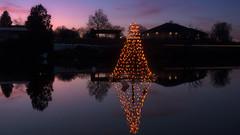 Tree on the Pond (Star Wizard) Tags: salem utah unitedstates us