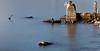 longexposure #03 (Puma 68) Tags: longexposure lungaesposizione mare sea pontile sistiana sigmaart24105mmf4dgoshsm