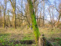 In the forest (✦ Erdinc Ulas Photography ✦) Tags: nature holland netherlands nederland dutch green grass winter plants oostvaardersplassen lelystad flevoland panasonic focus boom groen natuur reserve polder sky blue bos