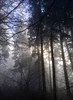 48/52 (wirsindfrei) Tags: 52in2017challenge 4852 happynewyear newyear electrical forest blackforest schwarzwald sun light winter natur nature landscape landschaft wald tree sky mist foggy nebel