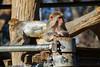 SDQH1970lr (yoshitoshi ABe) Tags: 20171227 吉祥寺 井の頭自然文化園 sdquattroh sigma100400mmf563dgoshsmcontemporary017 サル