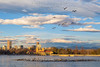 Flying Geese Over the Denver Skyline from Ferril Lake at Denver City Park at Dawn (Bridget Calip - Alluring Images) Tags: 2018 5280feetabovesealevel alluringimagescolorado bridgetcalip capitalcity citypark cityandcountyofdenver colorado denver ferrillake milehicity milehighcity park queencityoftheplains rockymountains blueskies clouds frozen geese lake lenticularclouds morning mountainwaveclouds recreation skyline skyscrapers sunrise