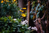 ILCE-7M2-08134-20171231-1529-Pano // Canon FD 300mm 1:4L (Otattemita) Tags: 300mmf4 bokehpanorama bokehrama brenizermethod canonfd canonfd300mmf4l canonfdn canonnewfd canonnfd florafauna fauna flora flower nature plant wildlife canonfd300mm14l sony sonyilce7m2 ilce7m2 300mm cnaturalbnatural ota