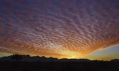 New Mexico Morning Light (BongoInc) Tags: newmexico lascruces organmountains sunrise morninglight