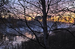 Sunset (Stefano Rugolo) Tags: stefanorugolo pentax k5 pentaxk5 smcpentaxda1855mmf3556alwr longexposure sunset birch tree mist colors light lake water landscape countryside branches grass reeds reflection clouds sky foliage fog